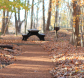 Spicebush Nature Trail with picnic bench area