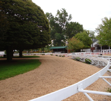 horse track surface