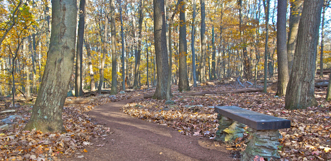 Spicebush Nature Trail with bench