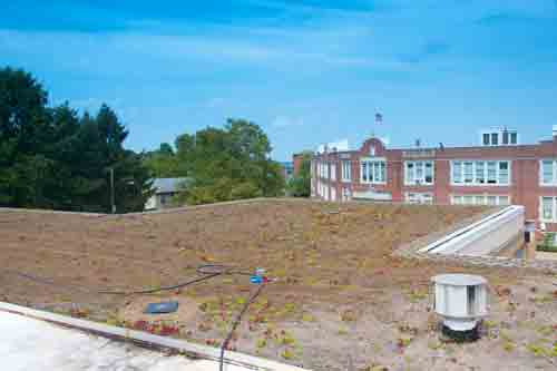 hazard library in new york with newly installed green roof